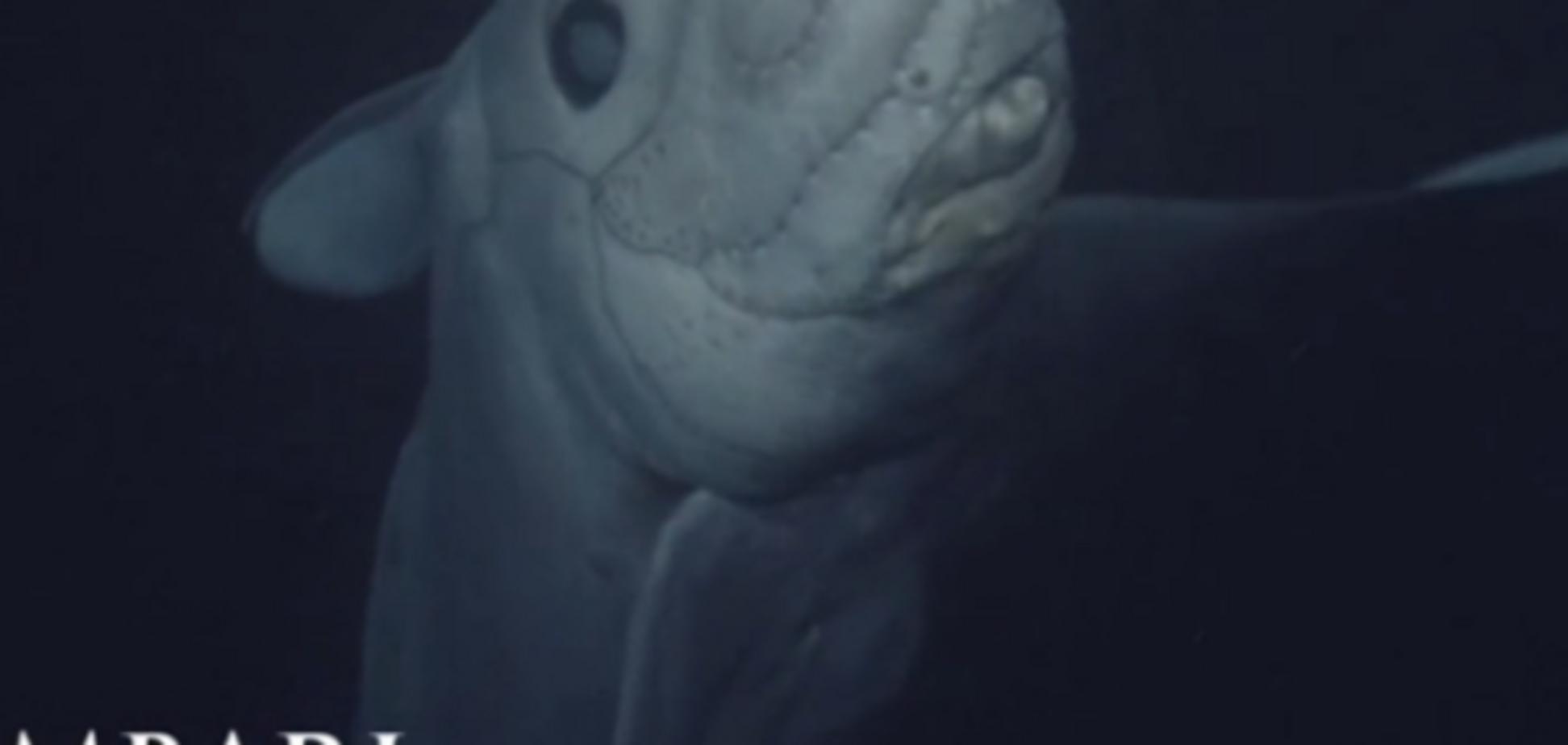 Hydrolagus trolli