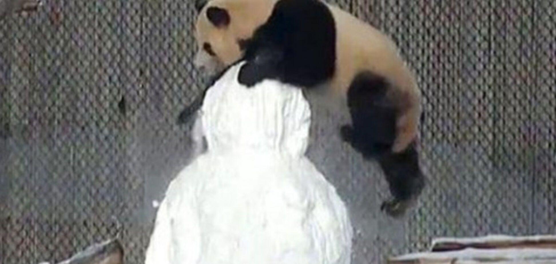 Панда сразилась со снеговиком