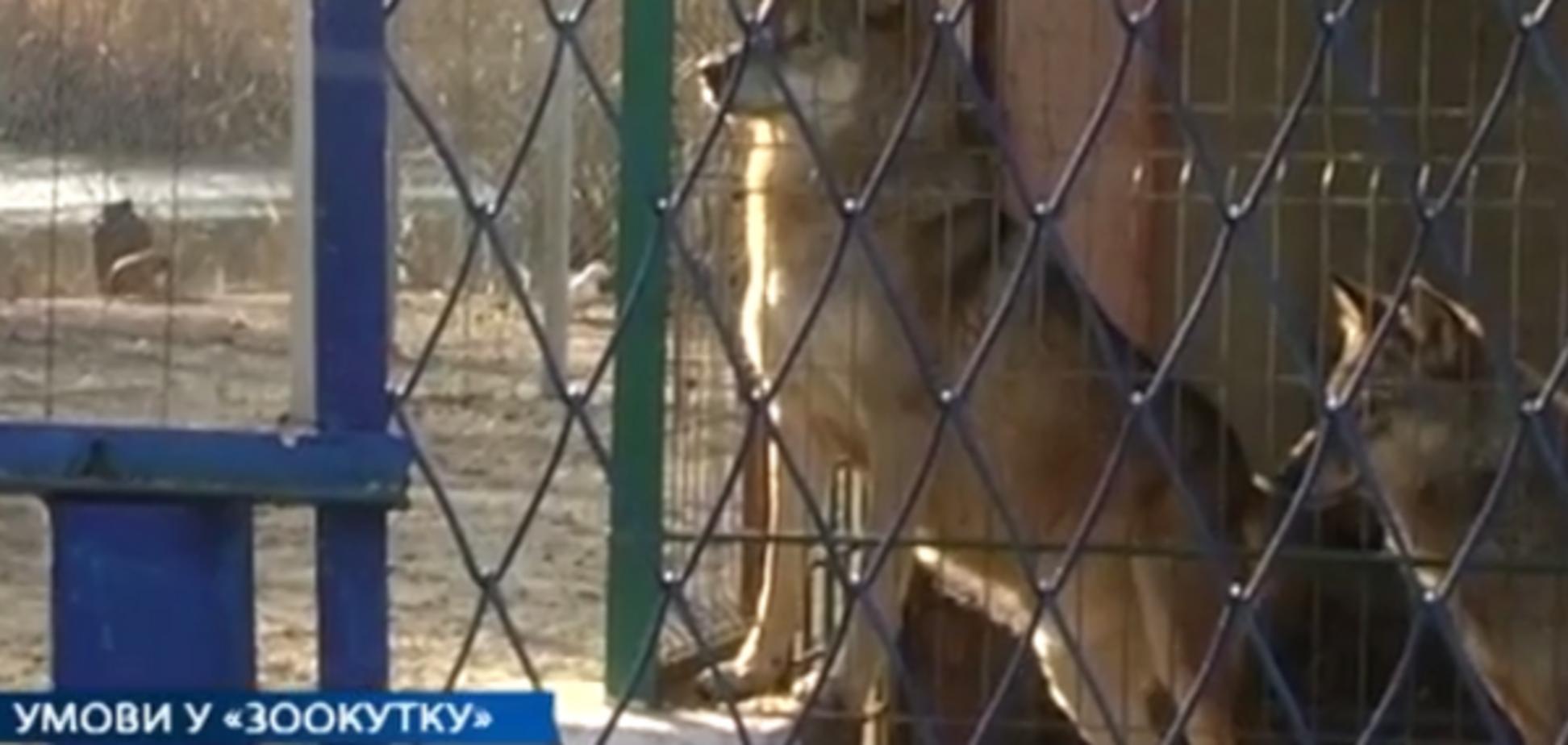 условия содержания животных в зооуголке