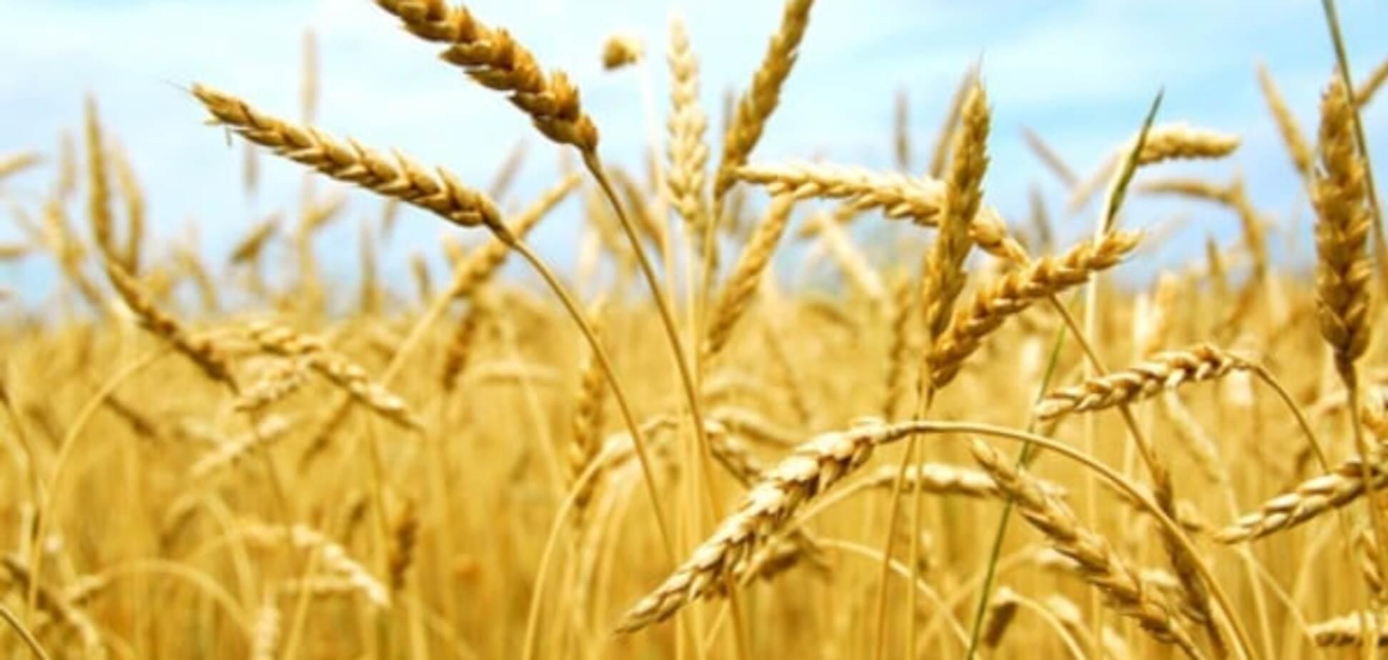 В Аграрному фонді розповіли, скільки зернових закупили восени