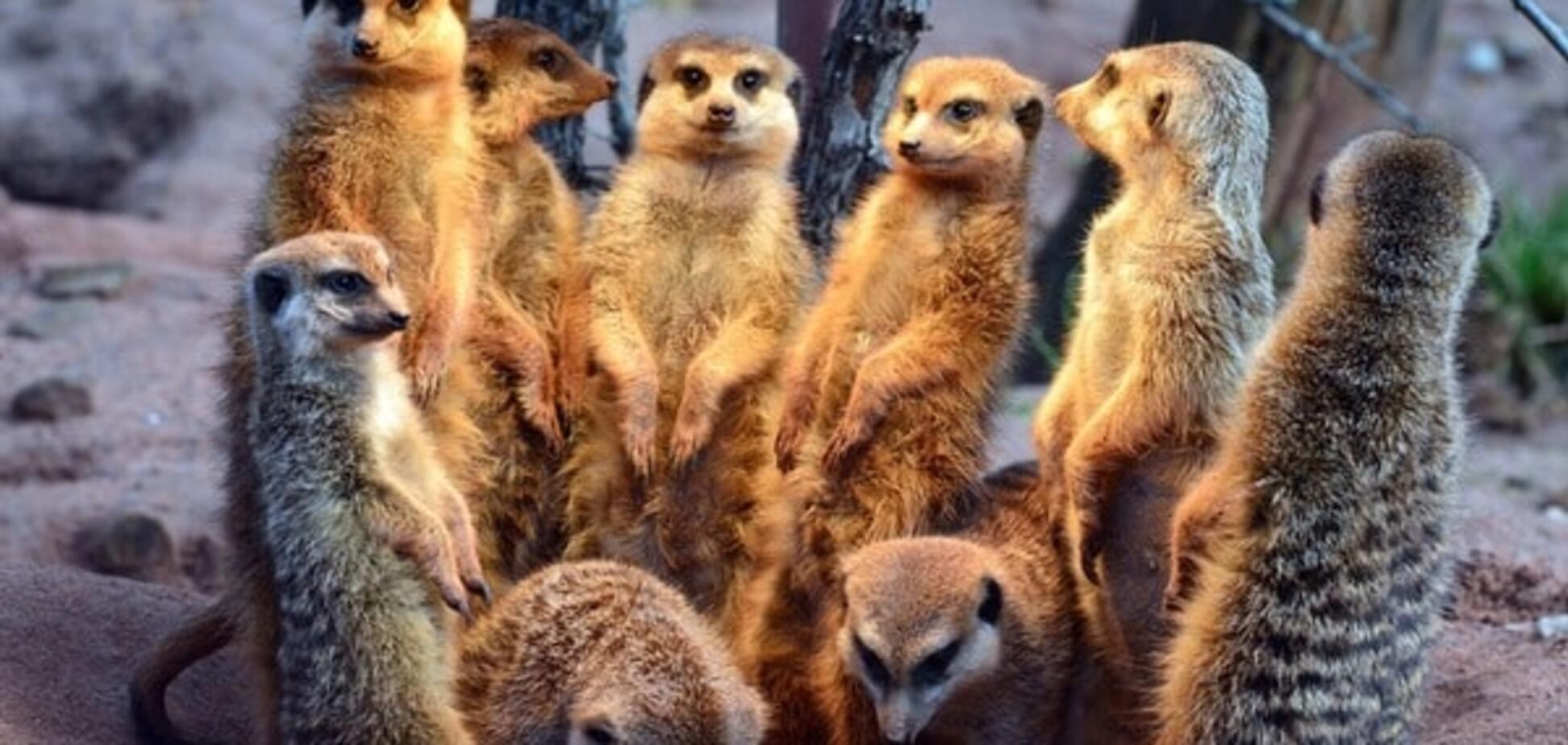 Вчені розкрили секрет великого родоводу ссавців