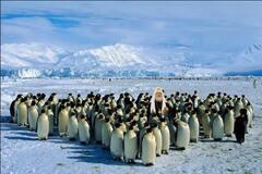 Російський патріарх Кирило відлетів у Антарктиду освячувати пінгвінів: реакція соцмереж