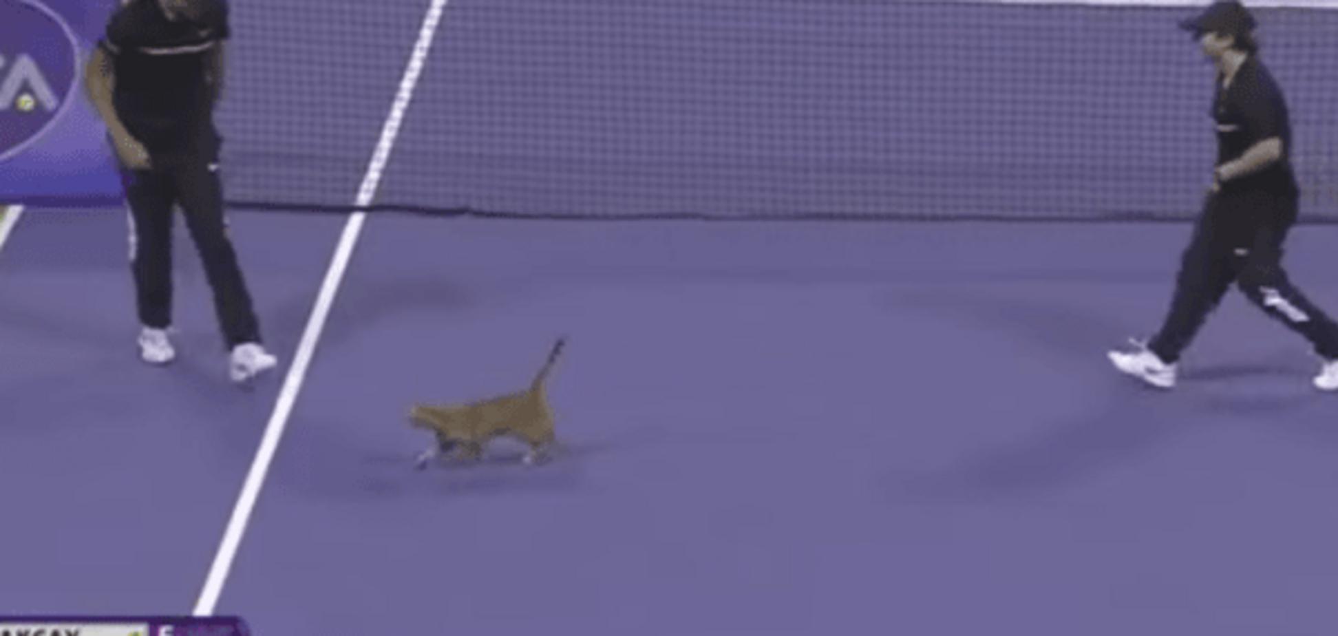 Смешная кошка вызвала фурор на теннисном турнире в Катаре: курьезное видео