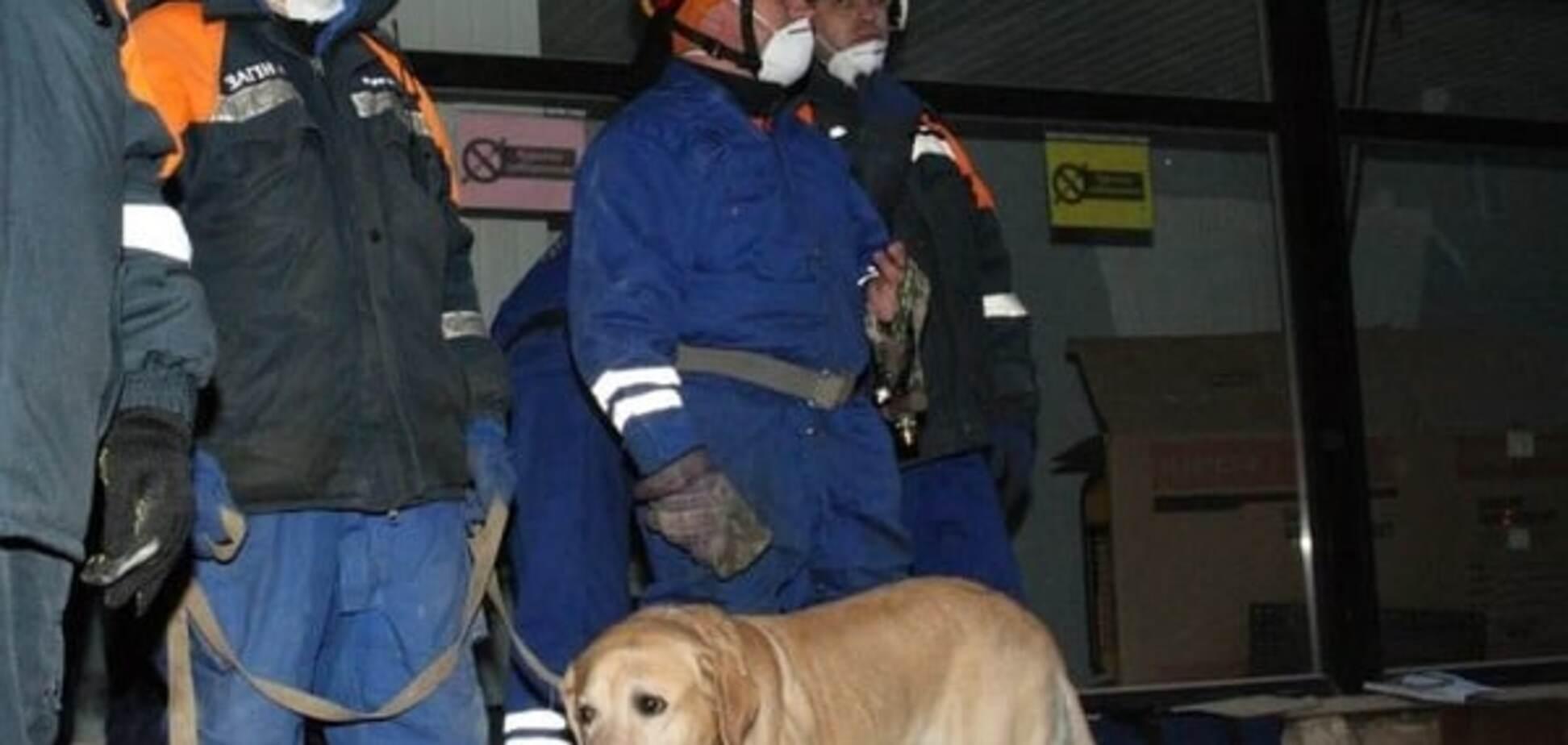 Обвал дома в Киеве: лабрадор-чемпион помог найти пострадавшего
