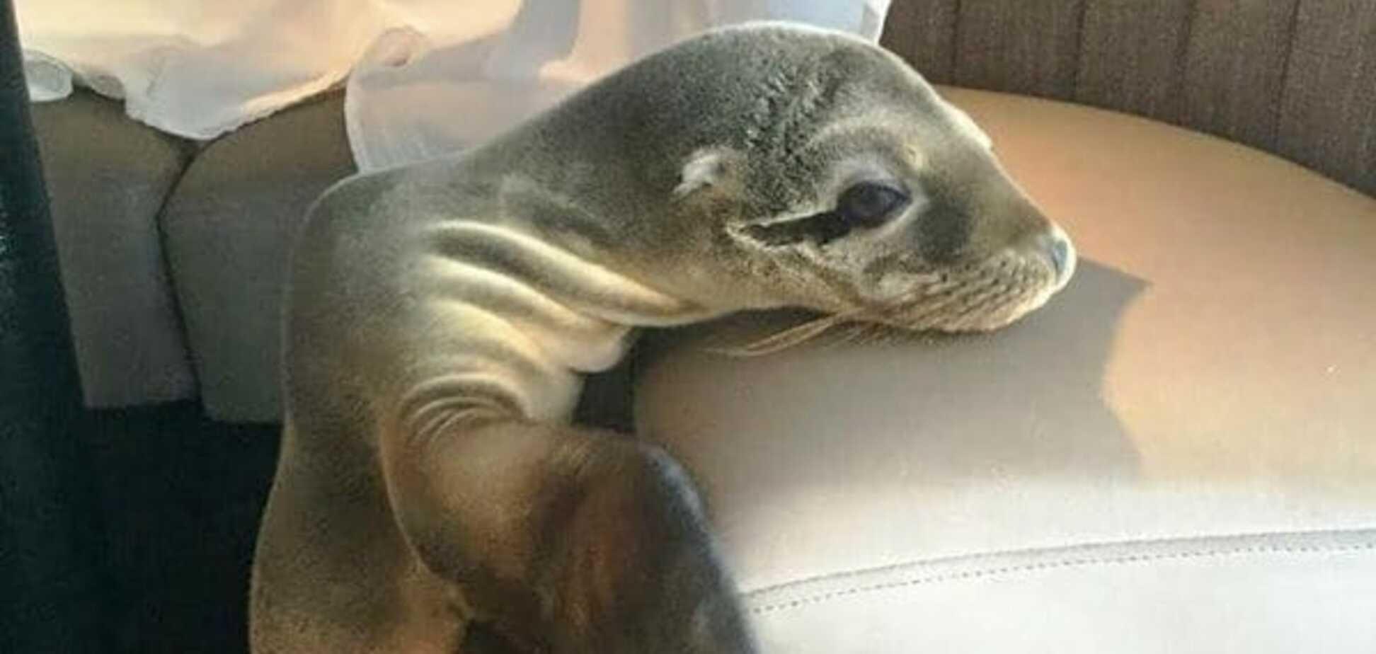 В ресторане обнаружили нежданного морского гостя: опубликовано видео