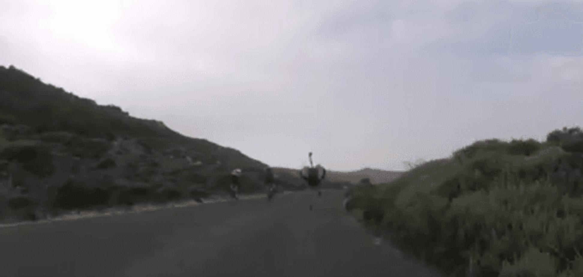 У Південній Африці страус влаштував ефектну погоню за велосипедистами: відеофакт
