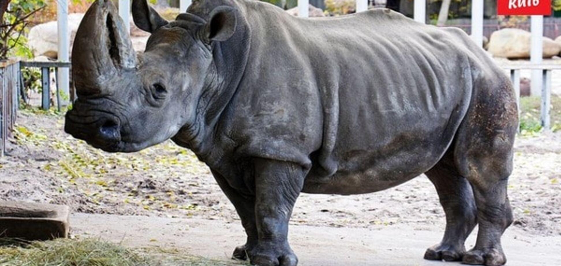 У київському зоопарку захворів 46-річний носоріг