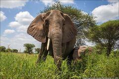 Национальный парк Тарангире: поразительные фото из царства слонов в Танзании