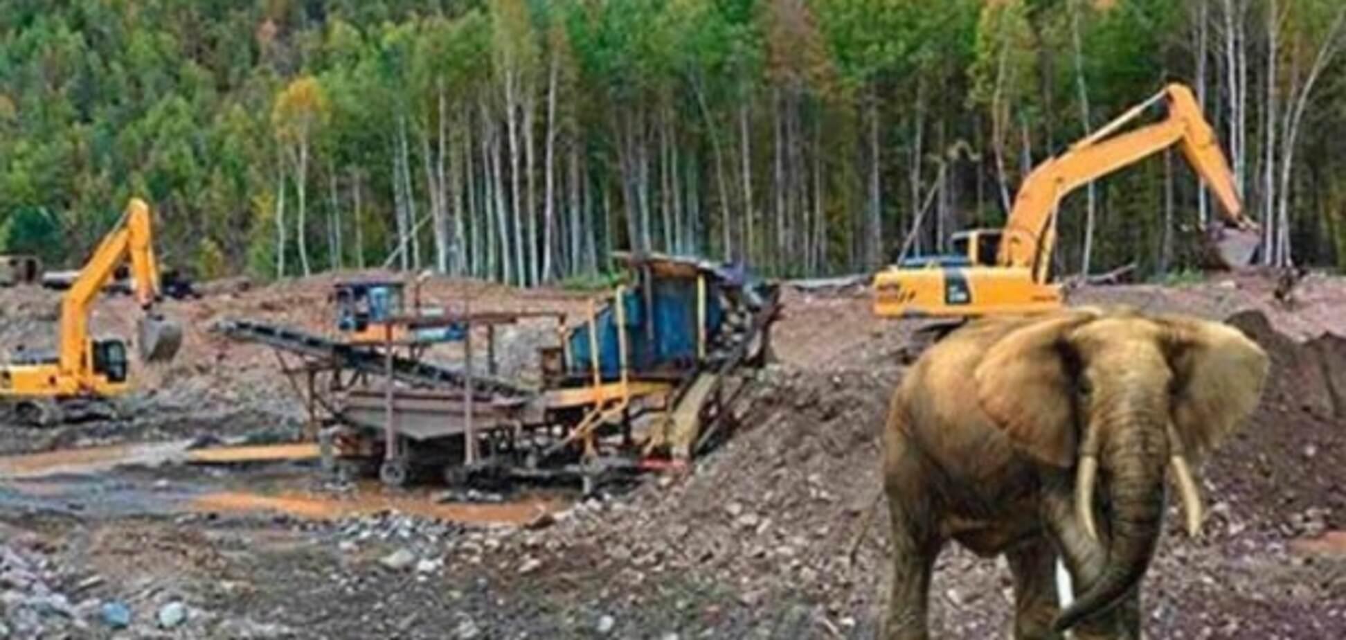 Слон, який утік із білоруської вантажівки, розігнав копачів бурштину - Слободян