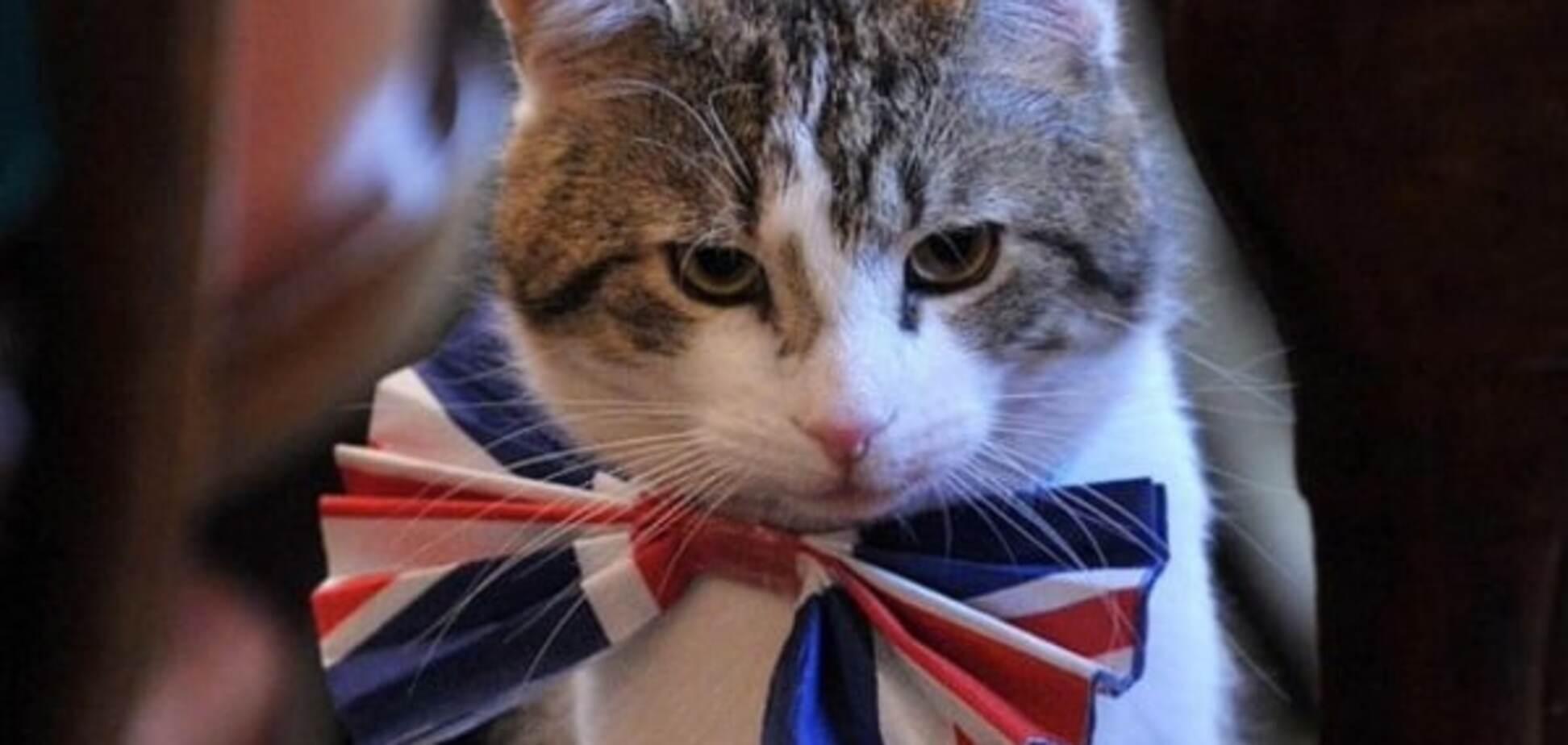 В Великобритании кот стал сотрудником МИД