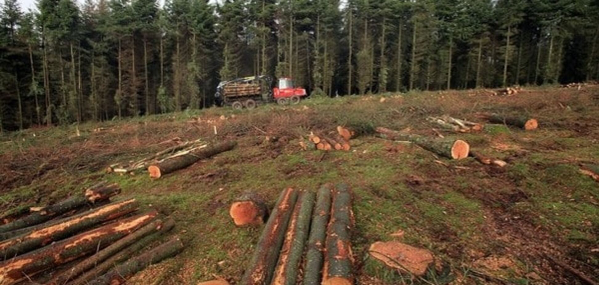 Кабмін звільнив главу Держлісагентства через масову вирубку лісів