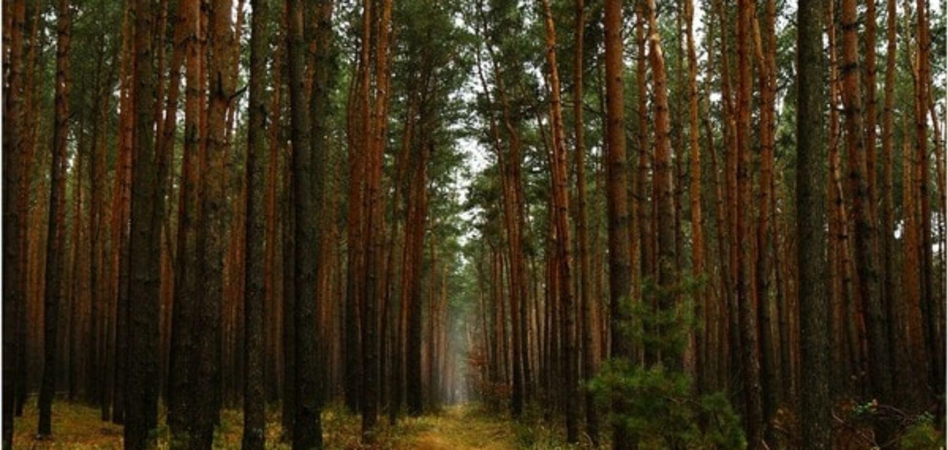 Еколог Борейко запропонував радикальний спосіб боротьби з вирубками лісу