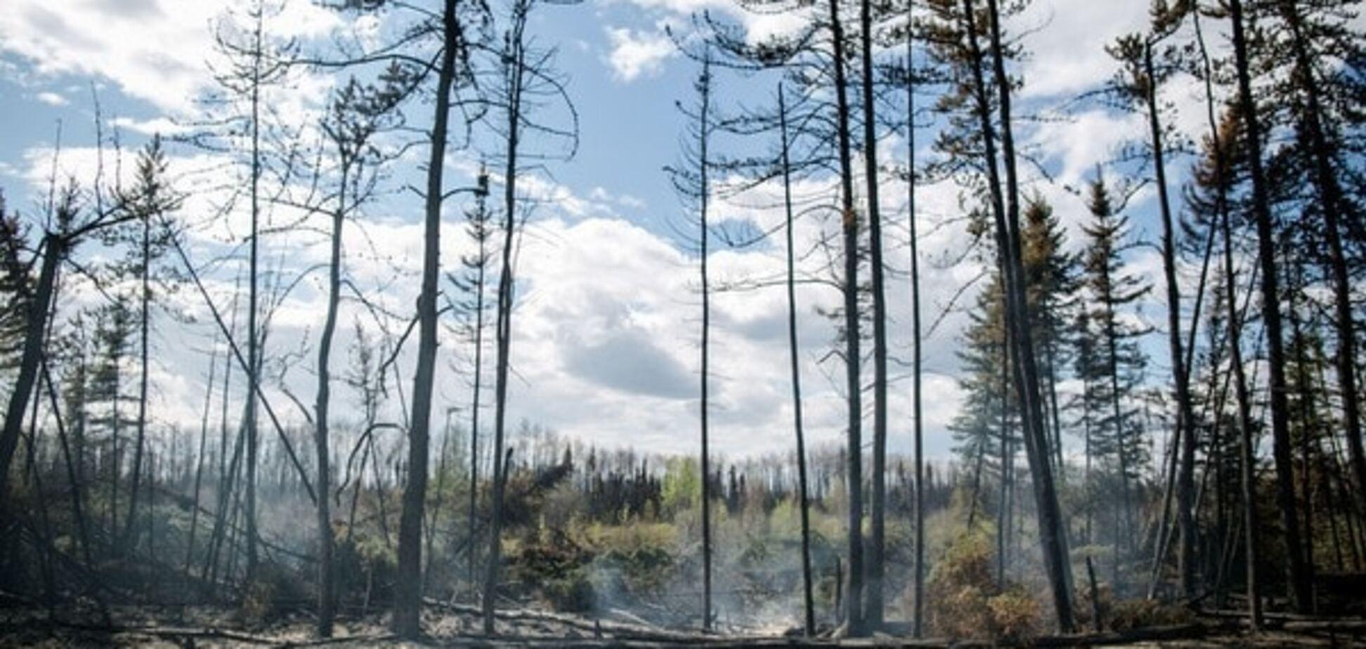 Дерево для Европы: украинские леса под угрозой уничтожения