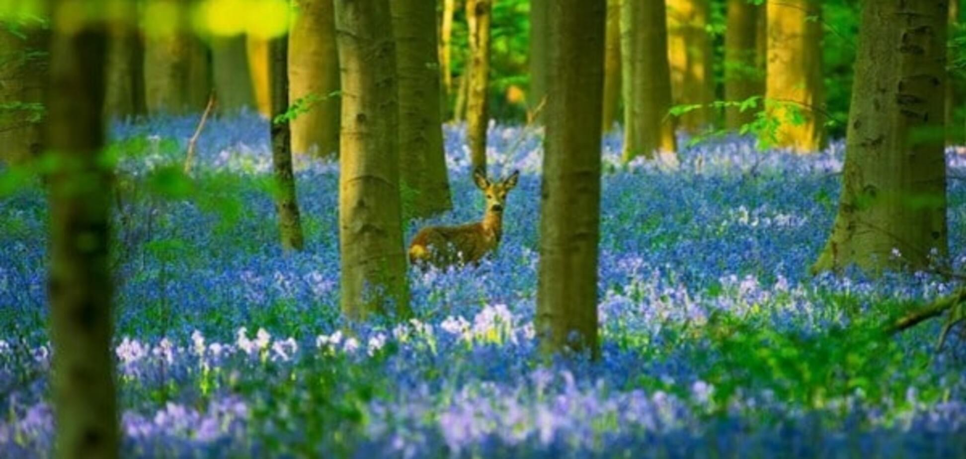лес цветы