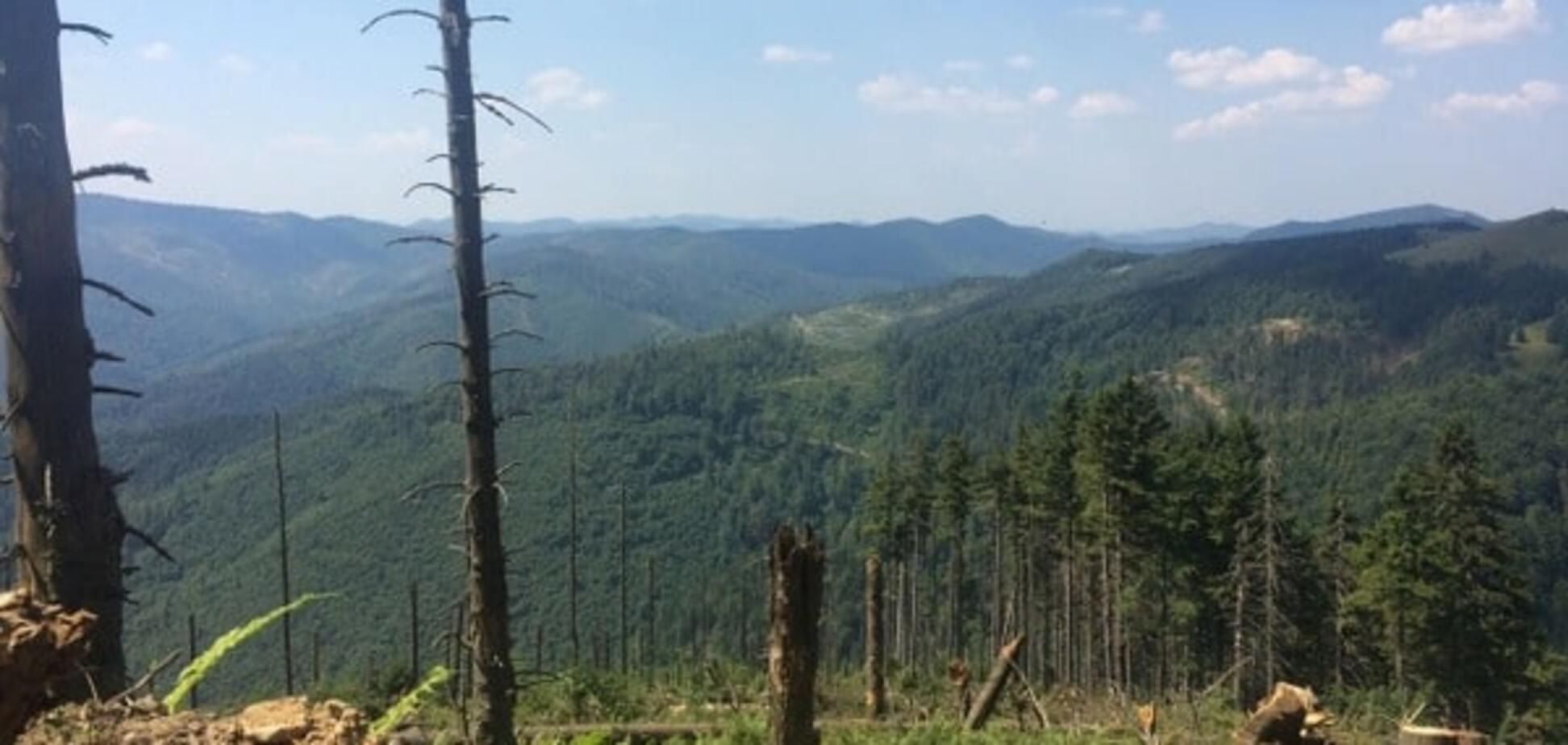 СМИ: нардеп Сольвар зарабатывает миллионы на незаконной вырубке леса