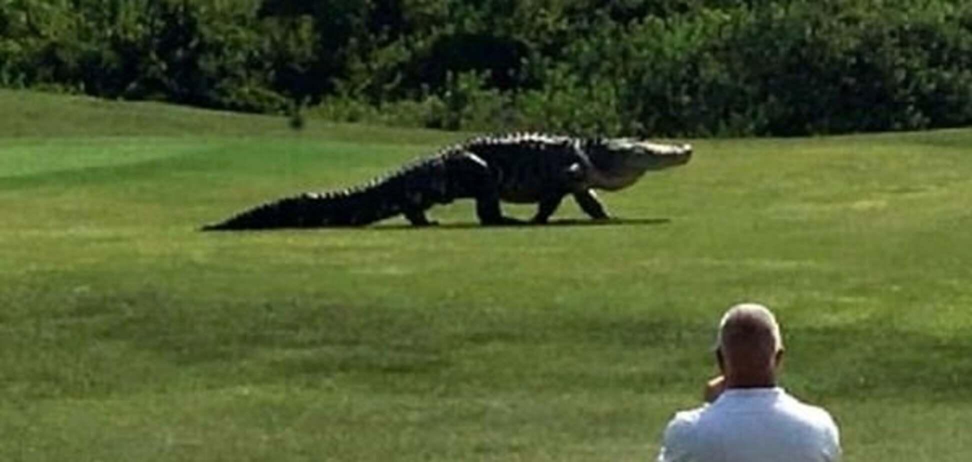 Алігатор у Флориді