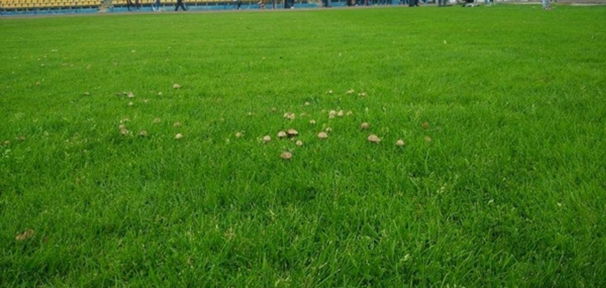 Сором і ганьба. На стадіоні клубу Прем'єр-ліги виросли гриби
