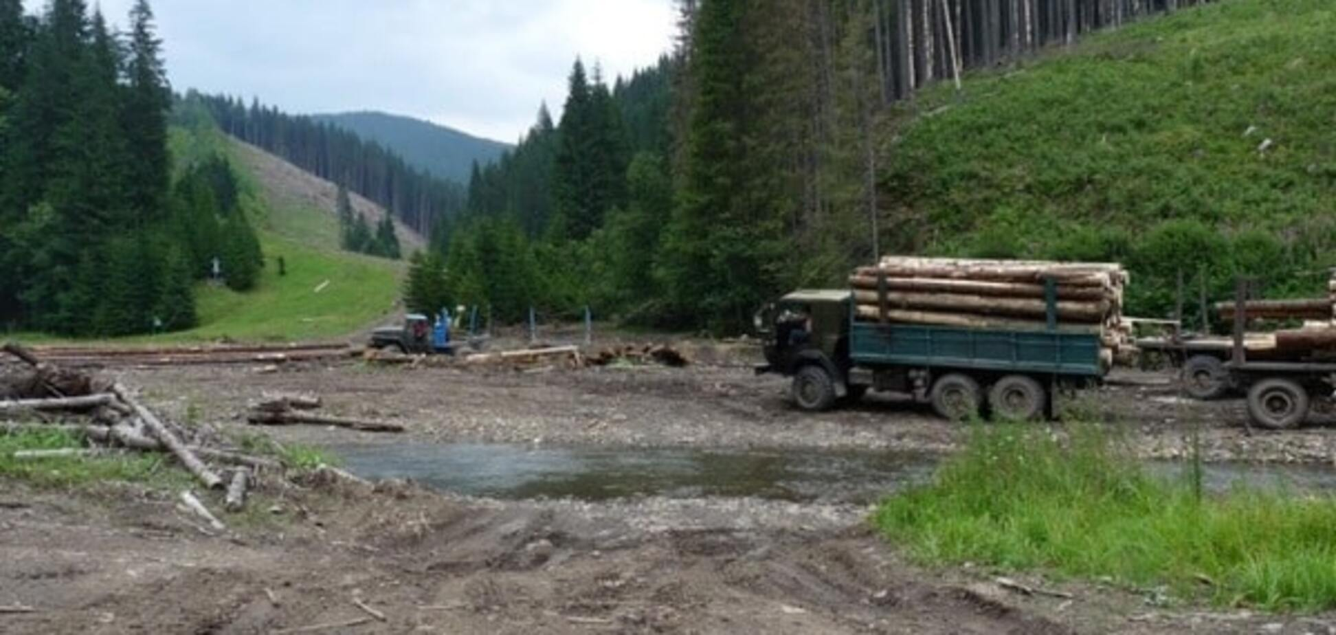 Вырубка леса на Волини