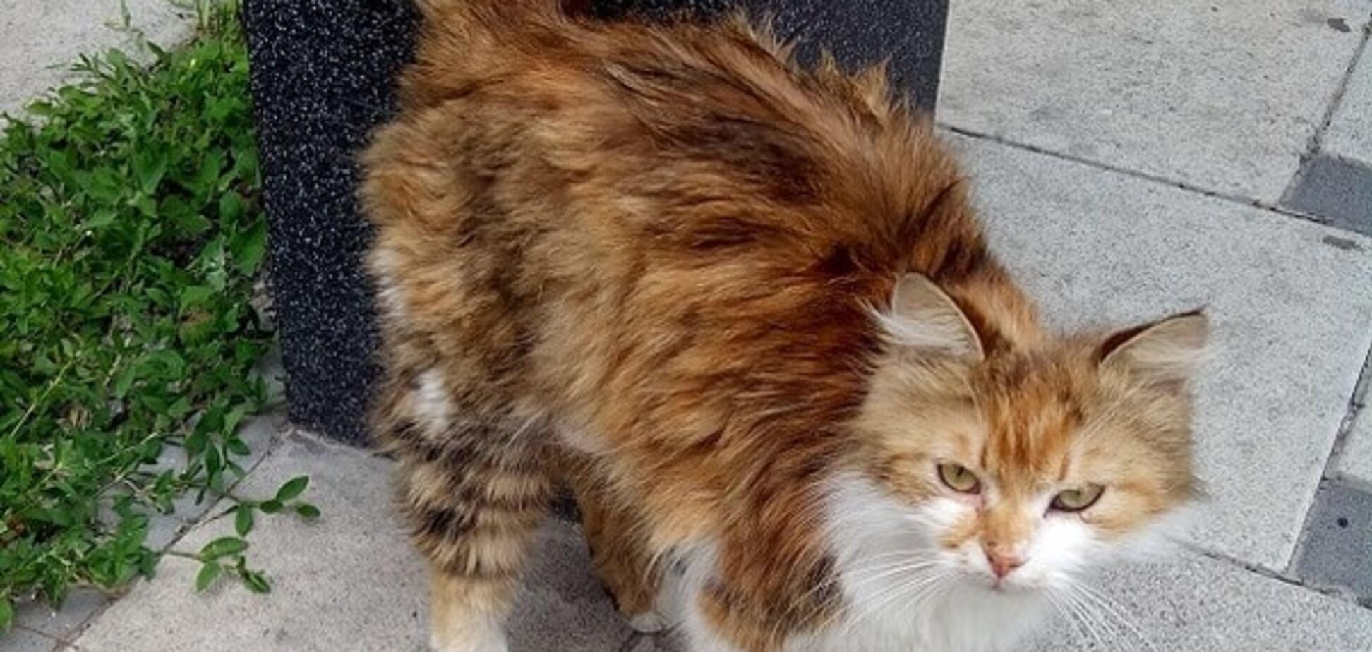 кішка Чіта