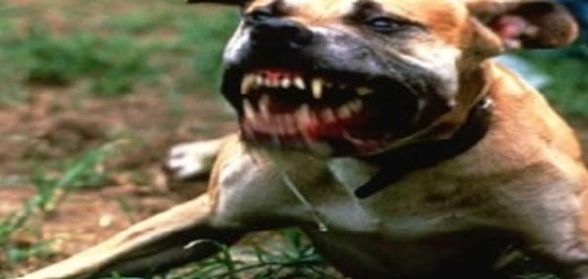 Бойцовский пес
