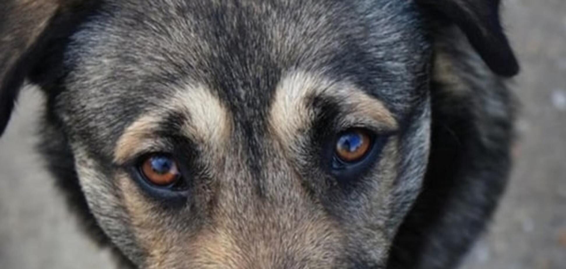 Труїти, мучити і вбивати тварин: звідки взявся рух зоохантерів і що з ним пропонують зробити