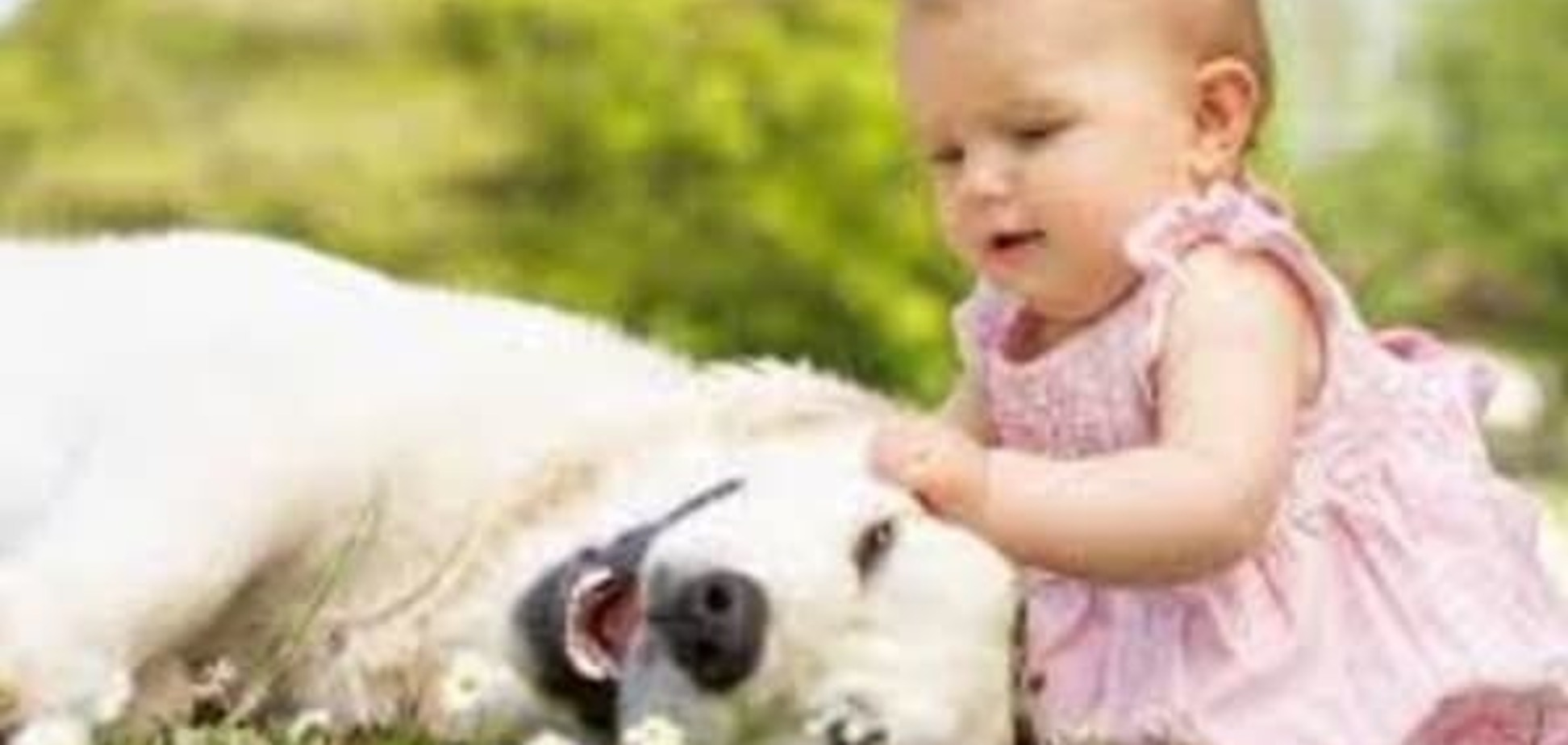 Ребенка укусила собака: что делать?