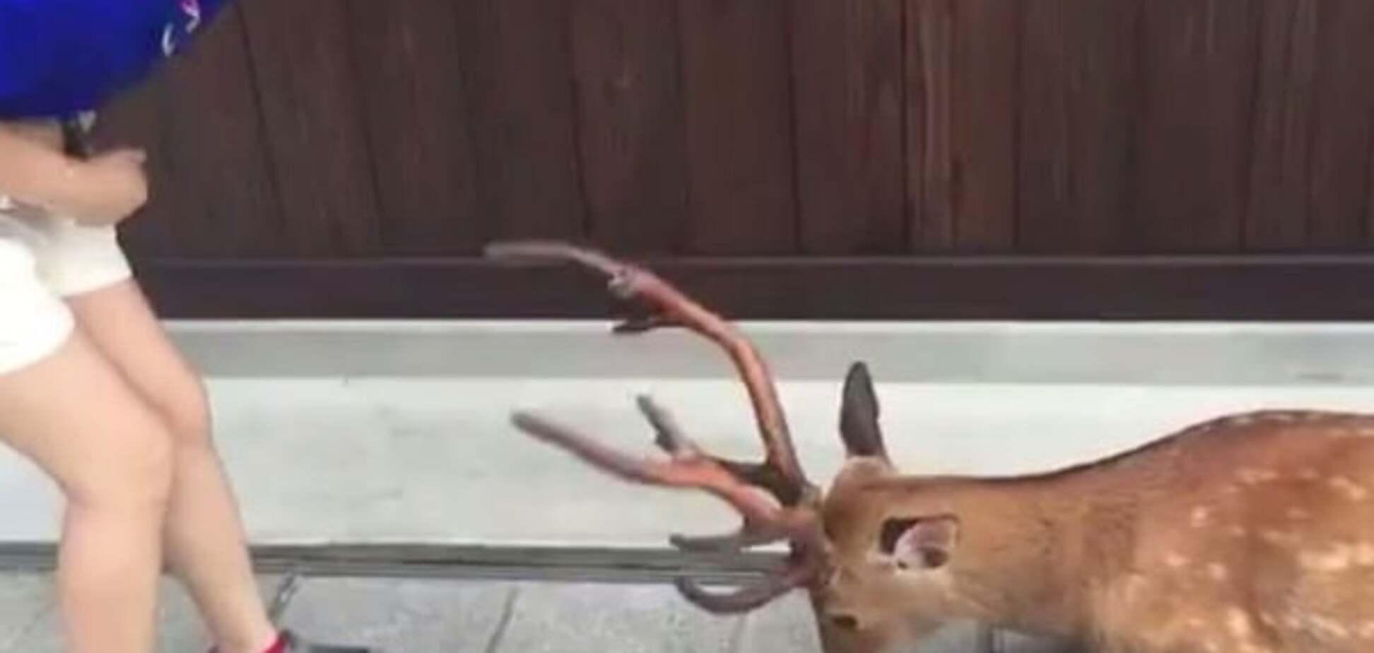 Вежливый олень