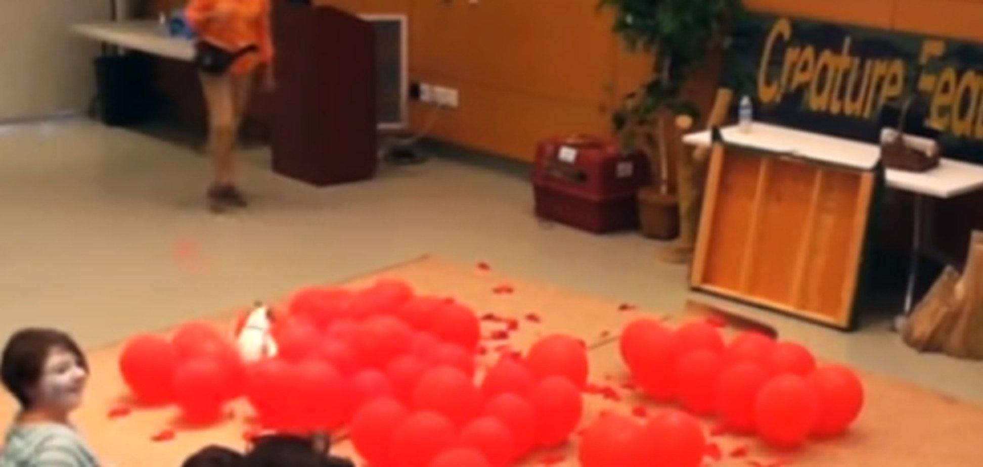 Собачка і кульки