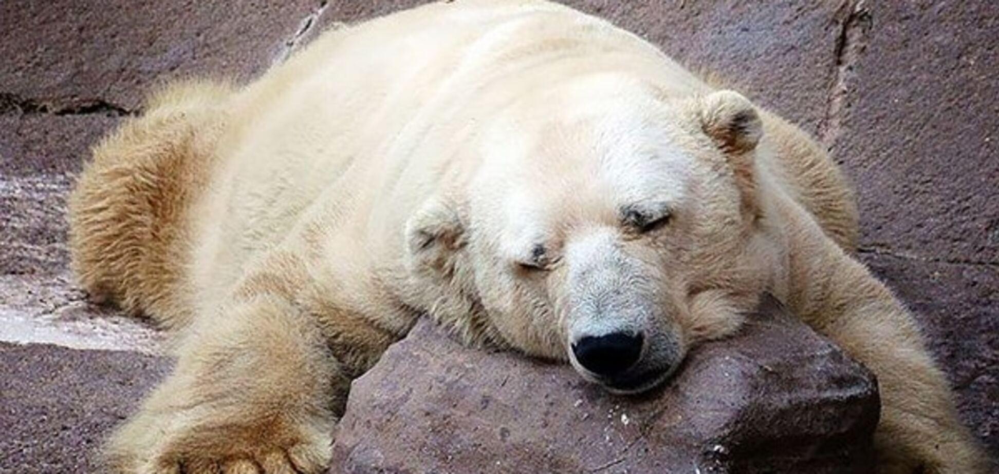 Самый грустный медведь в мире - Артуро