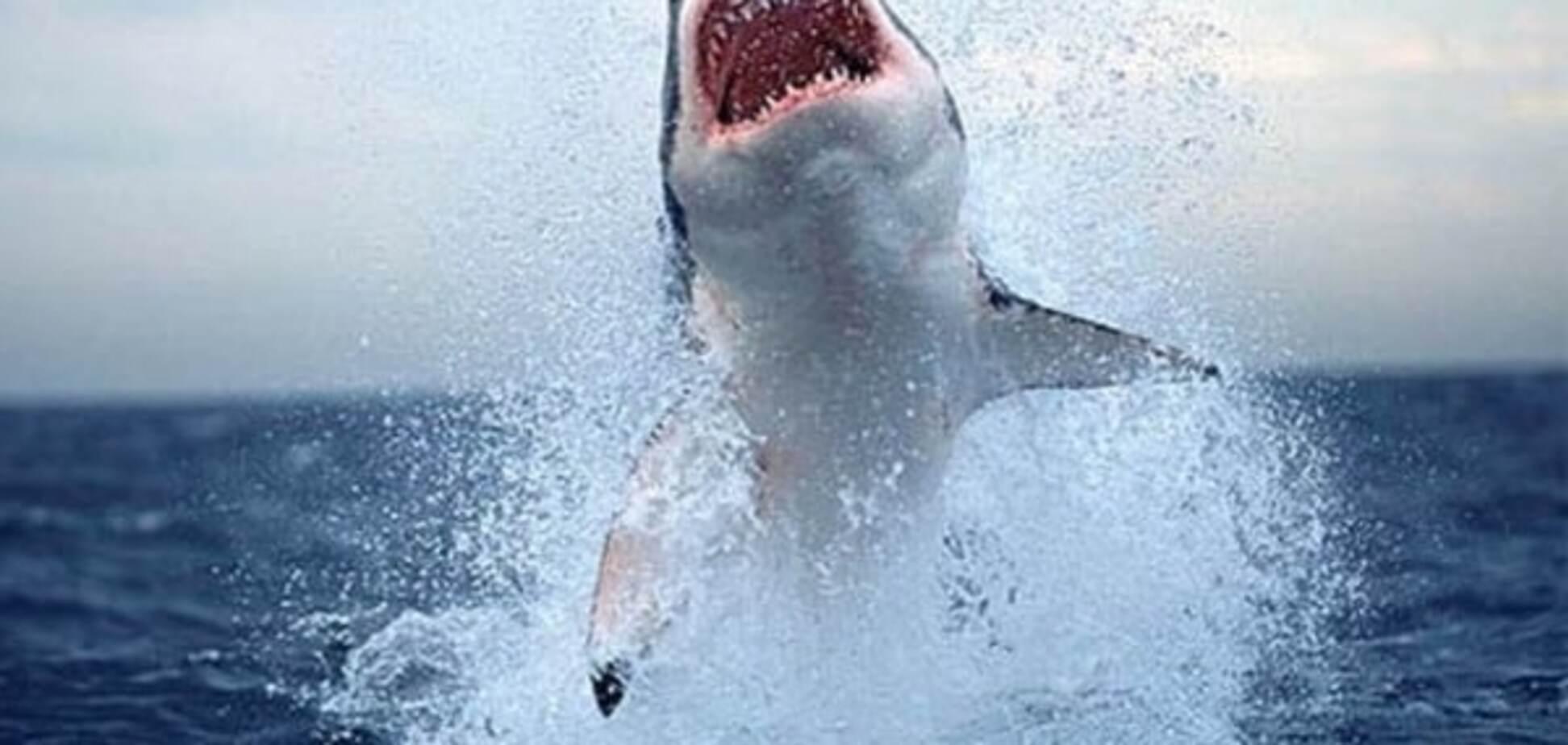 В Мексиканском заливе в смертельной борьбе сошлись две акулы. Видео