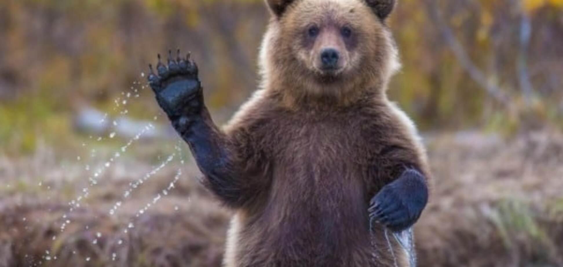 В Китае медведь своровал мед вместе с ульем