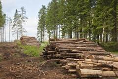 Как остановить варварскую вырубку леса