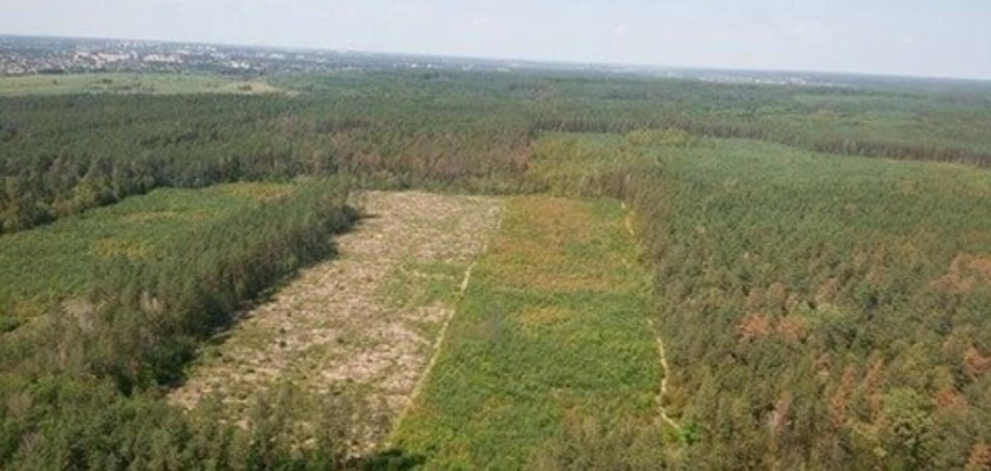 Вирубка лісу на Київщині