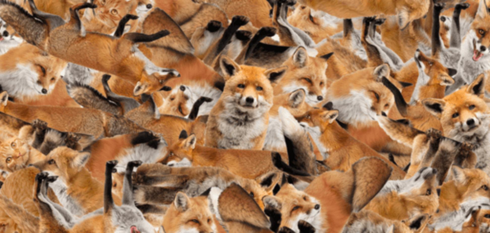 Коты среди лис