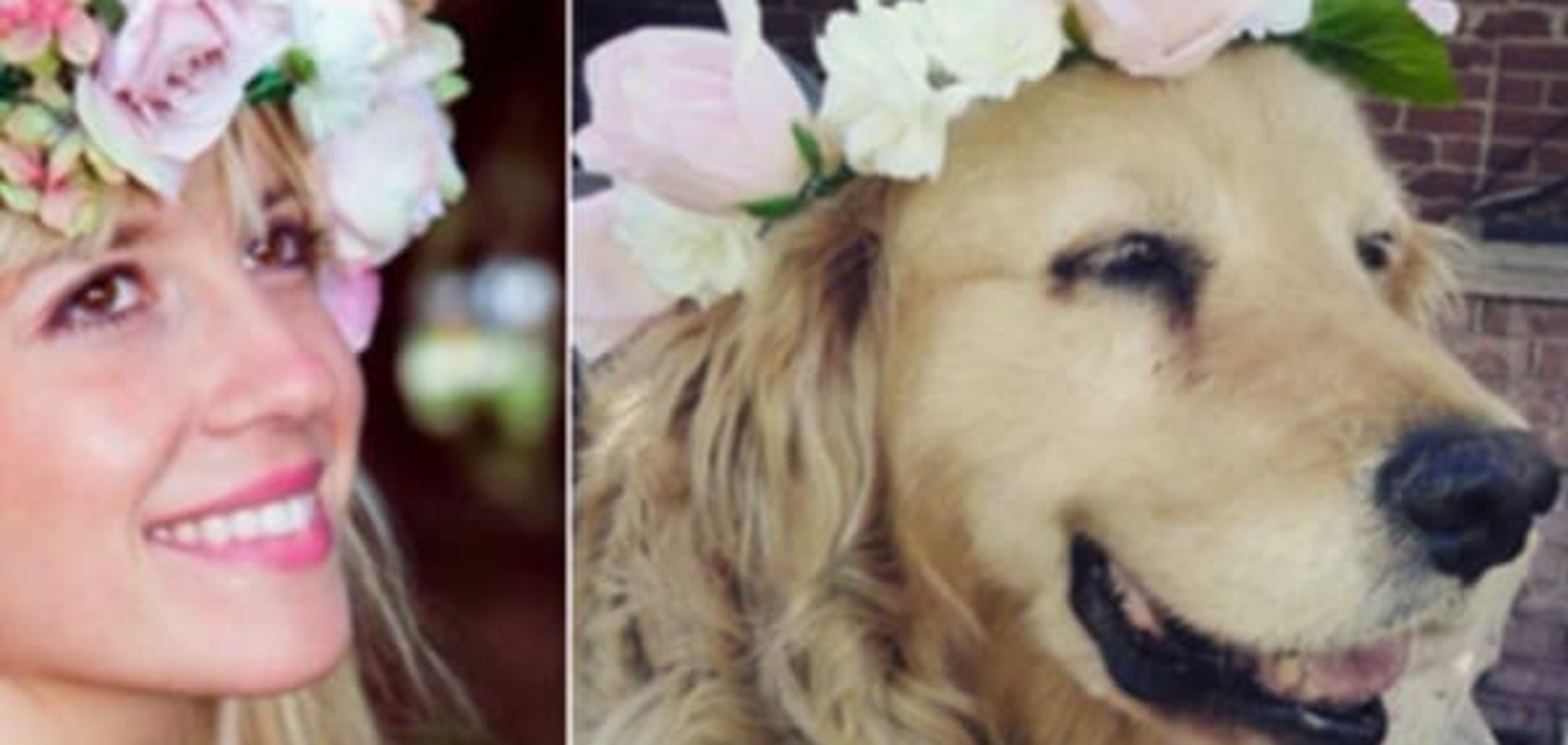 Двойник среди собак