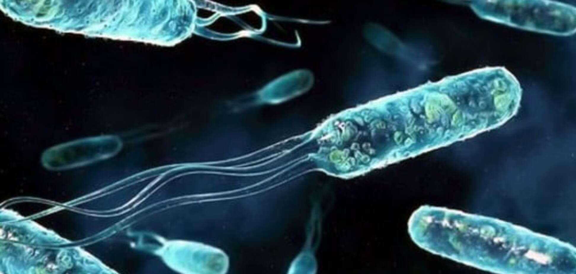 Ученые показали, как эволюционирует бактерия кишечной палочки: видеофакт
