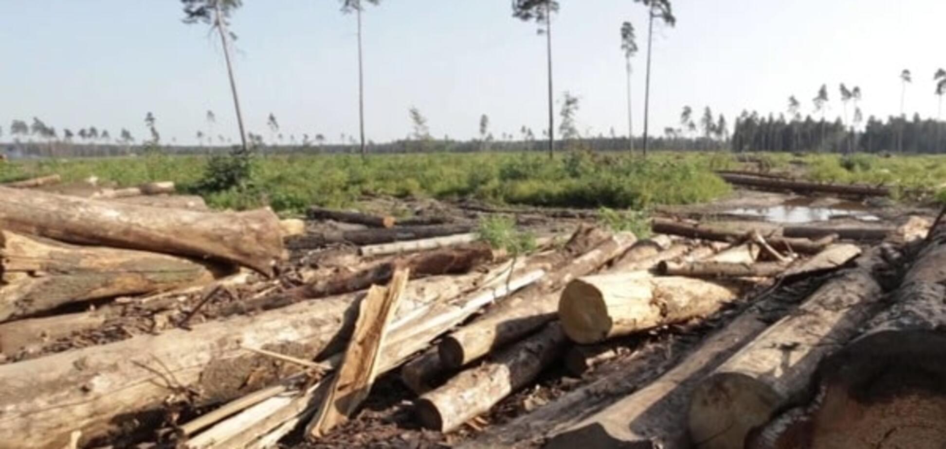 Гослесагентство ошеломило убытками от незаконной вырубки леса