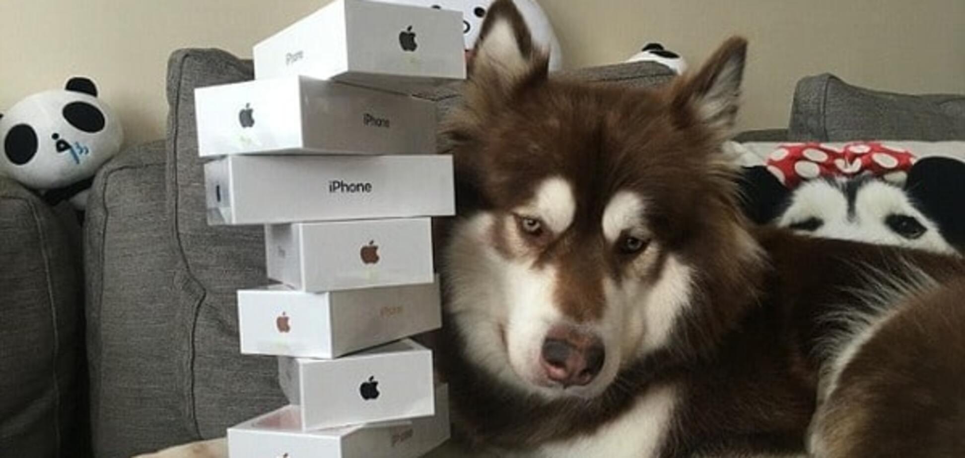 Причуды богачей: сын китайского миллиардера купил своей собаке восемь iPhone 7