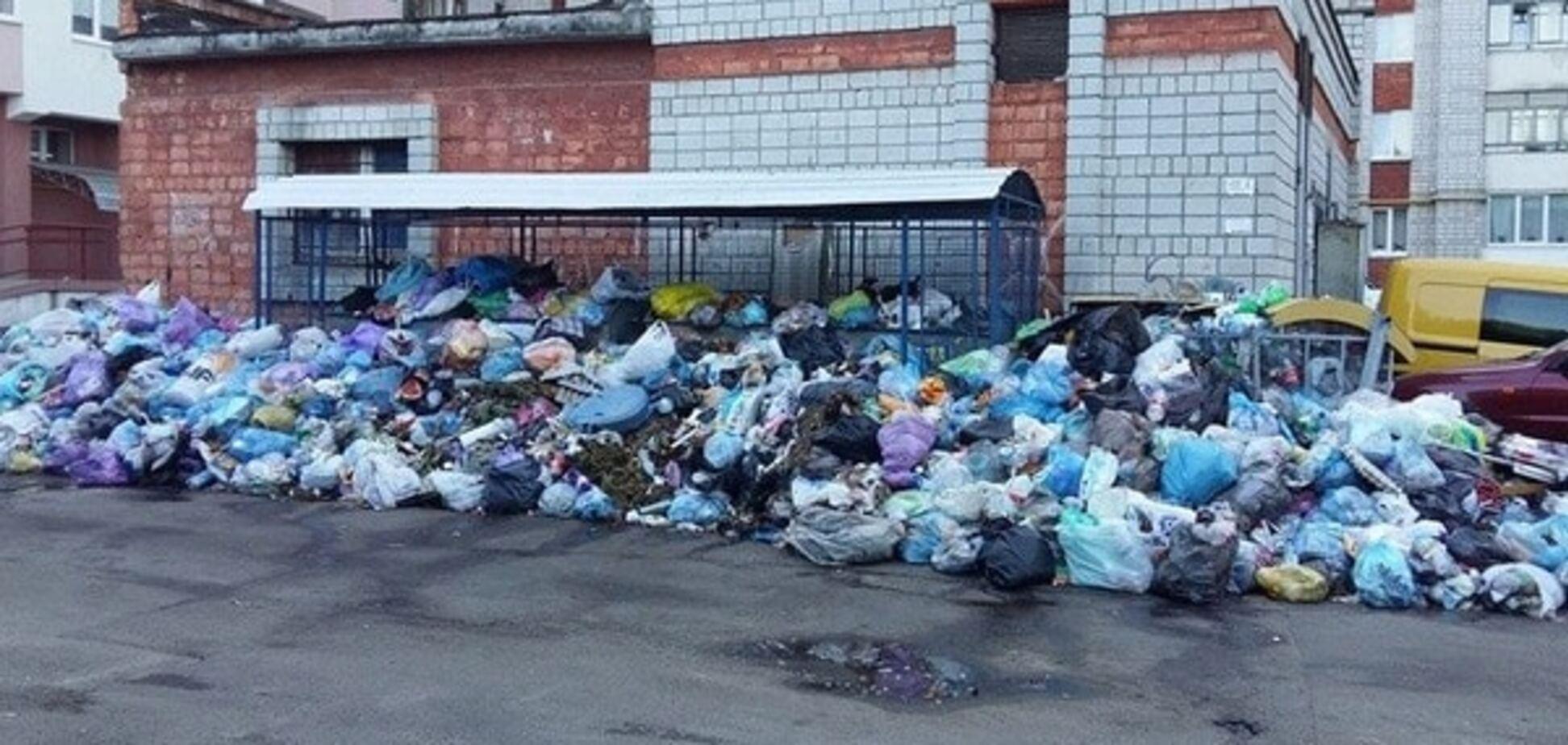 'На людей скоро будуть кидатися щури': львівський двір 'потонув' у смітті