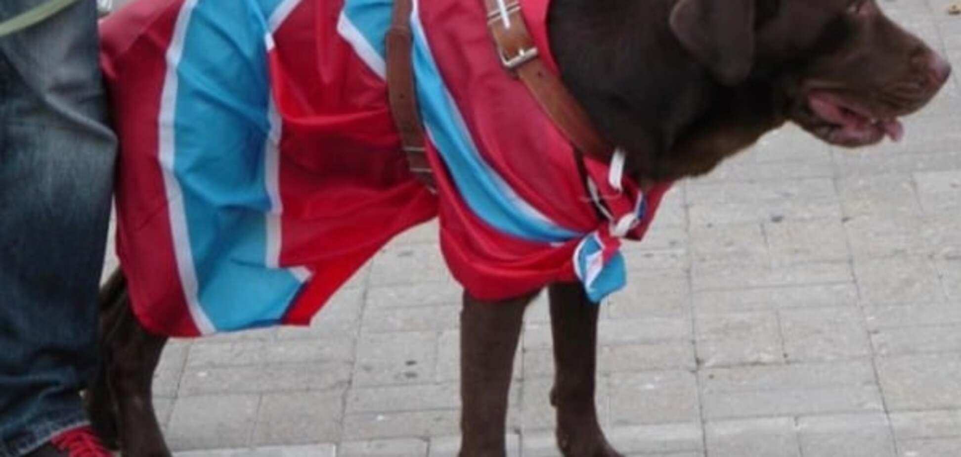 'Нет флага ДНР? Плати': в Горловке предпринимателей штрафуют 'согласно правилам Украины'