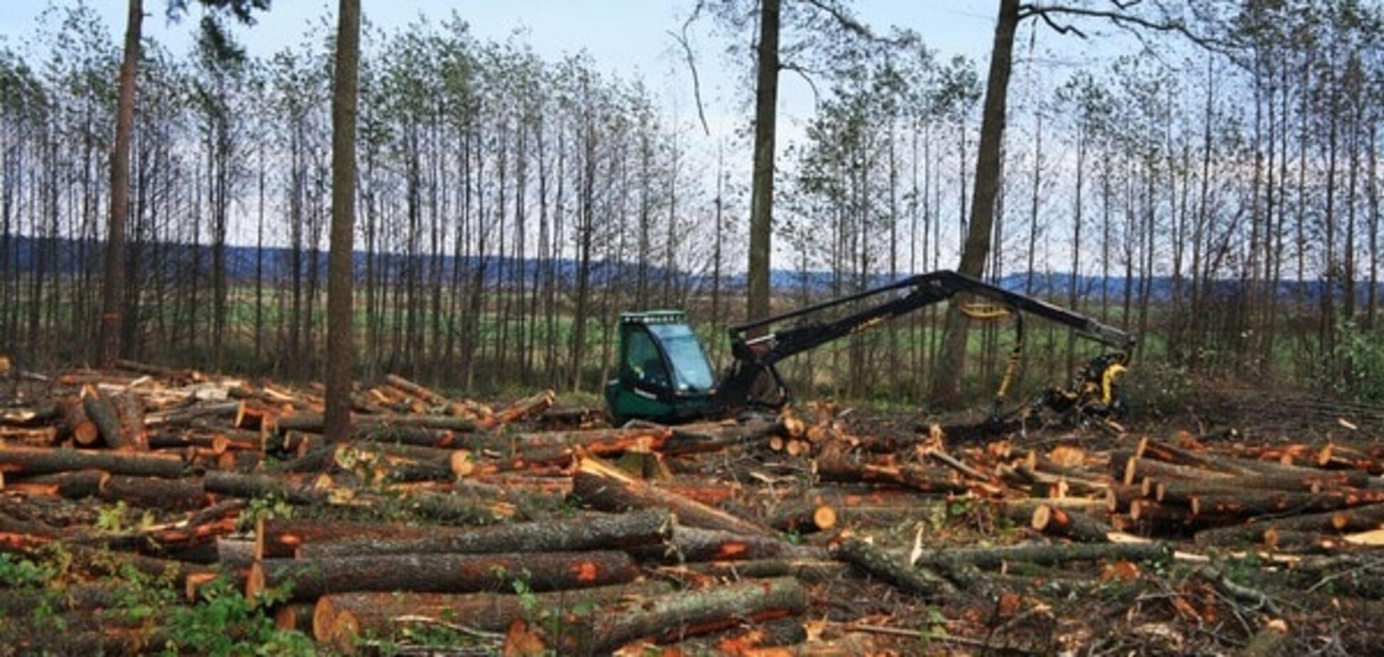 Житомирские таможенники помешали незаконному вывозу леса на 1 млн грн