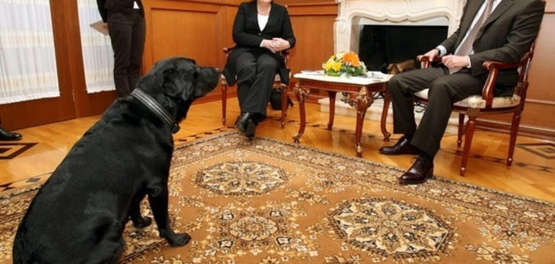 Пригадала собаку: експерт пояснив жорстку відповідь Меркель Путіну