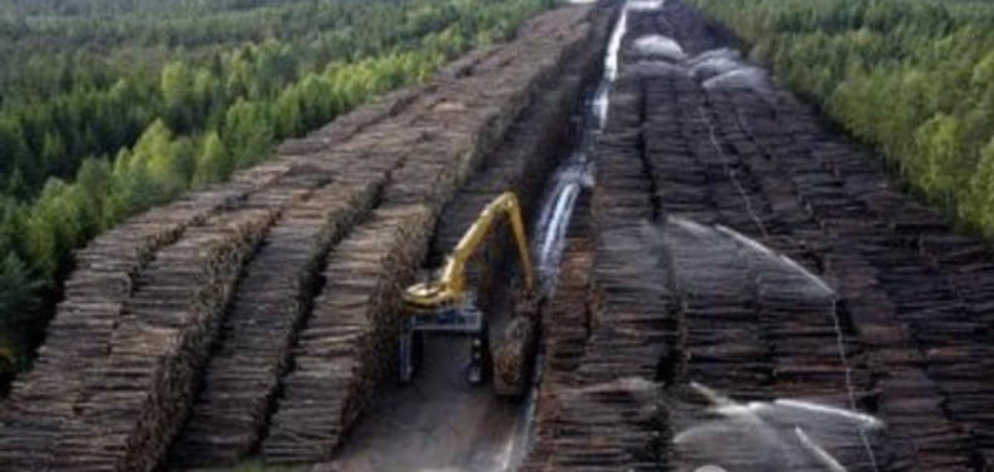 В Украине ужесточат наказания за незаконную вырубку леса — Юшкевич
