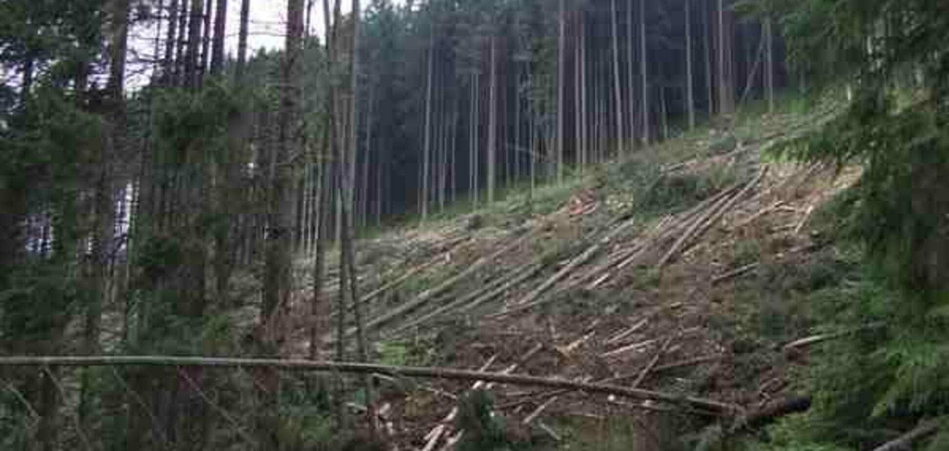 В Украине запретят сплошную санитарную вырубку леса