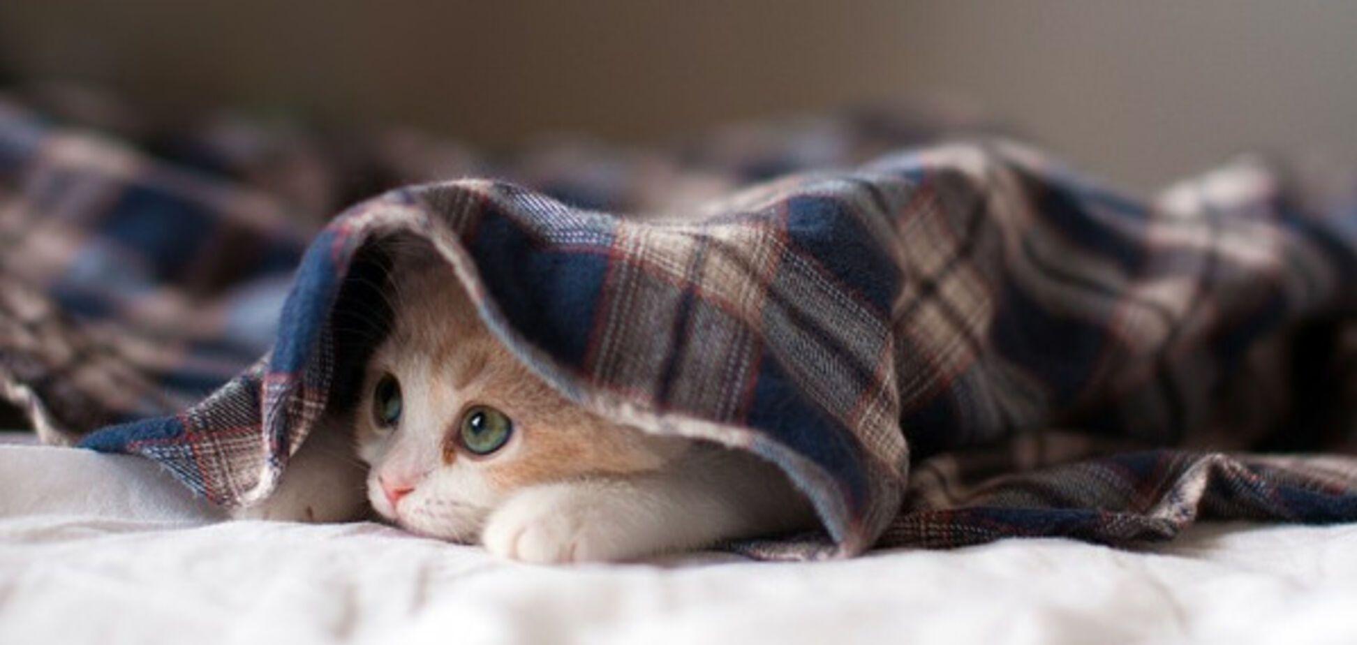 испуганный котенок под одеялом