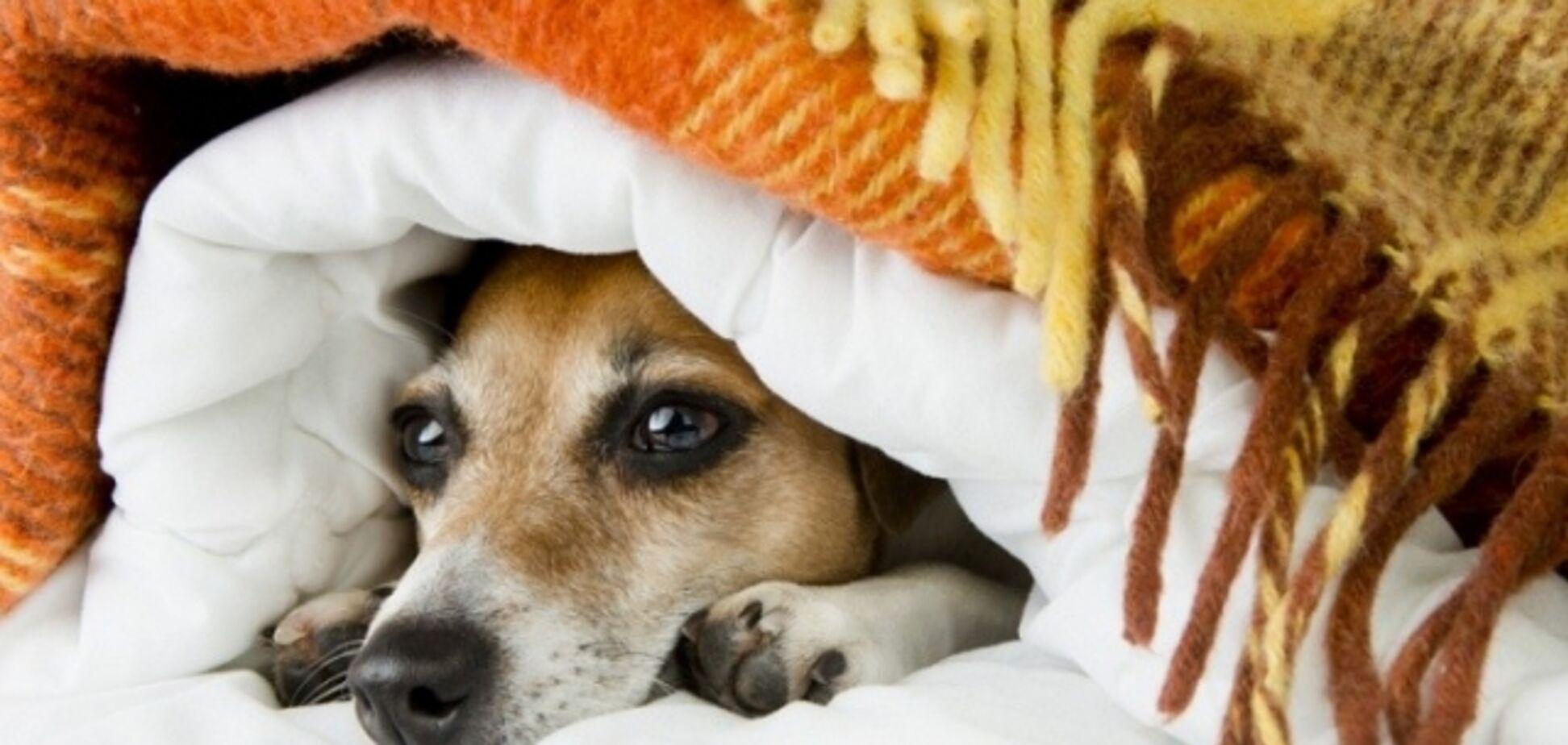 Замерзли? У Києві назвали нові терміни підключення тепла в житлових будинках