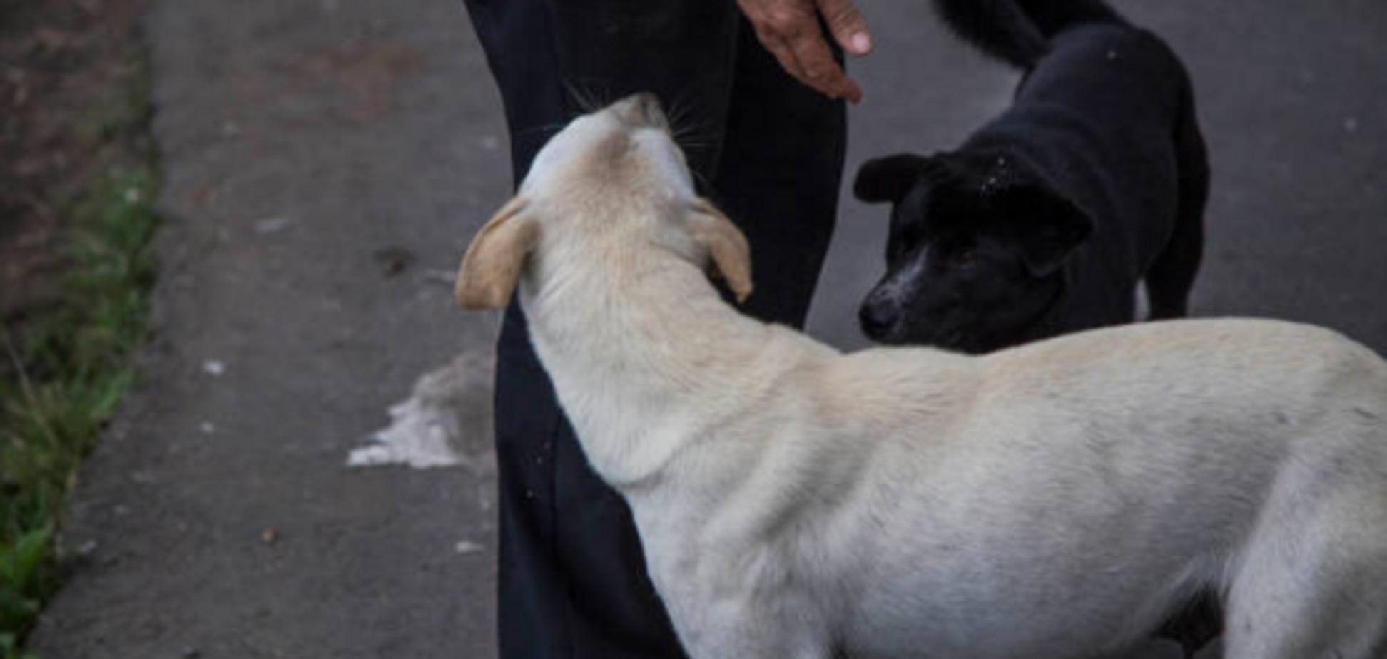 Налог на питомцев: в Раде решили утвердить перечень потенциально опасных пород собак