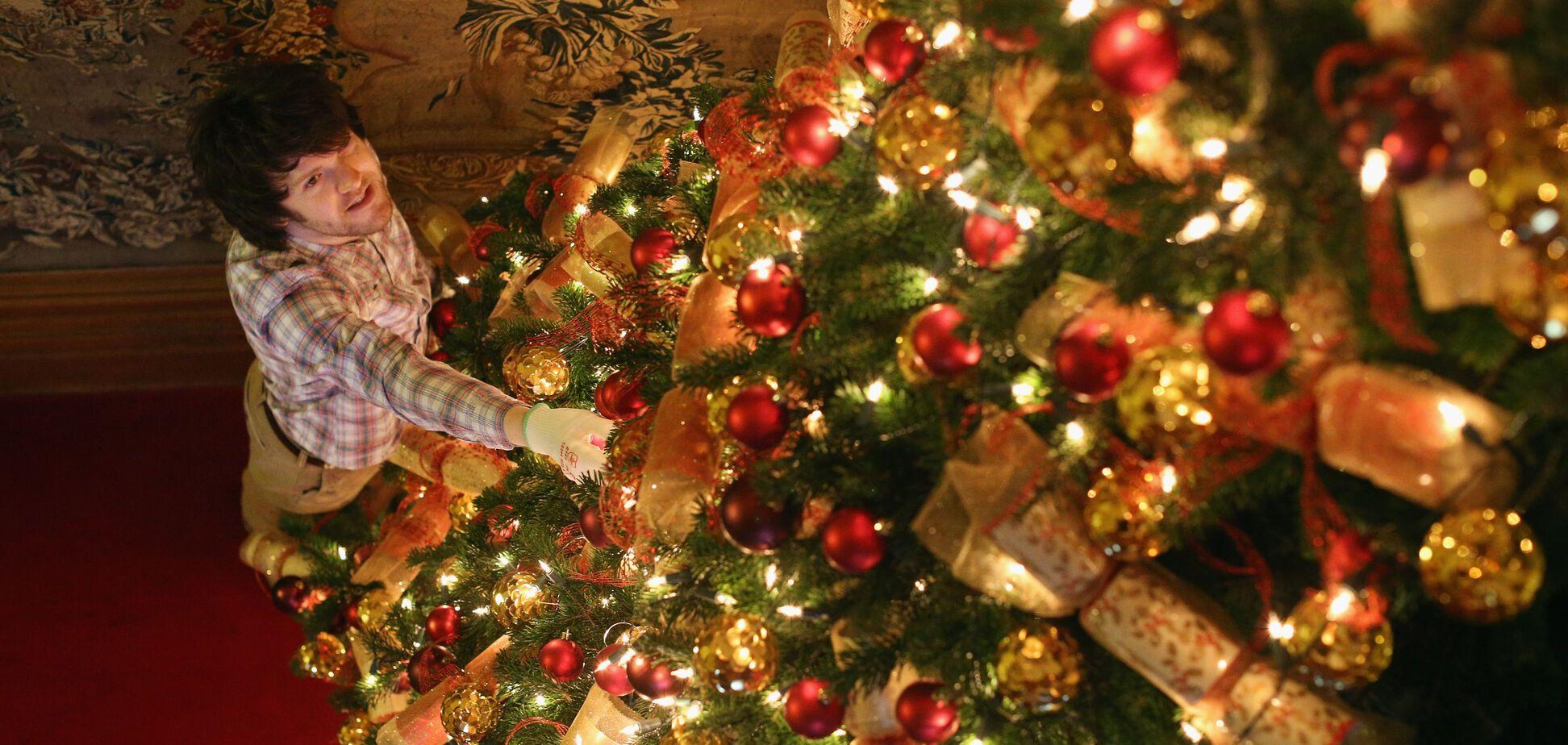 В Україні почали продавати новорічні ялинки: названі ціни