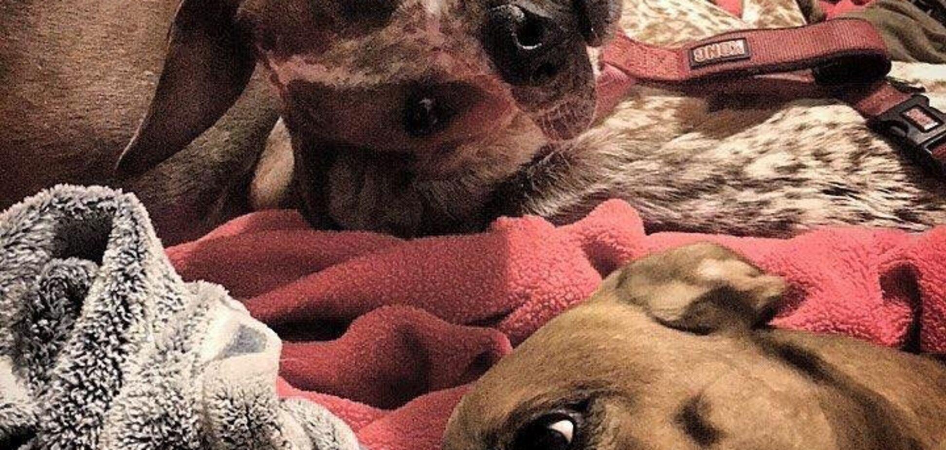Що сталося з собакою? Дивовижна оптична ілюзія підкорила мережу