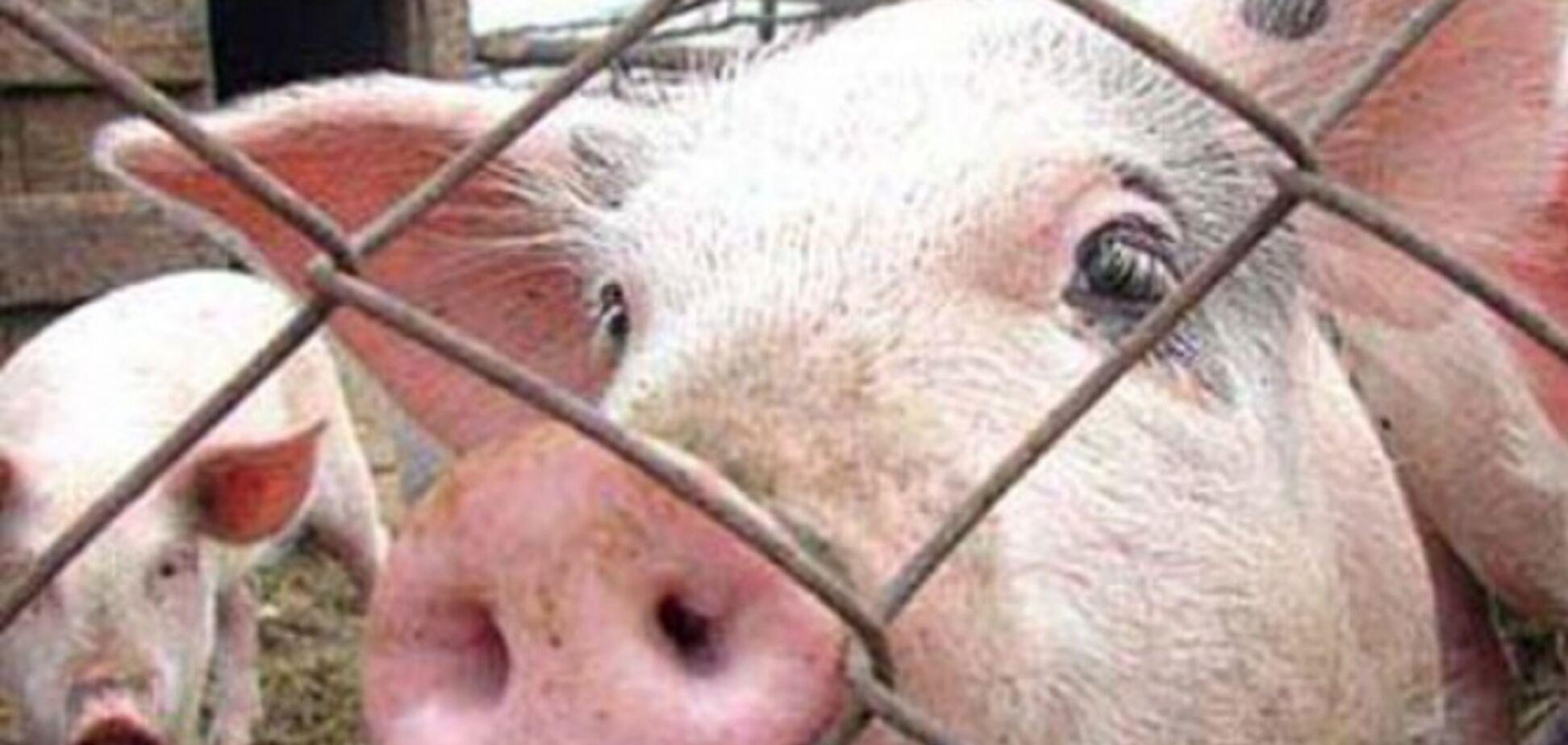 Будут давить бульдозером? ФСБ заявила о громкой победе над свининой из Украины